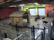 Dog Daycare Webcams